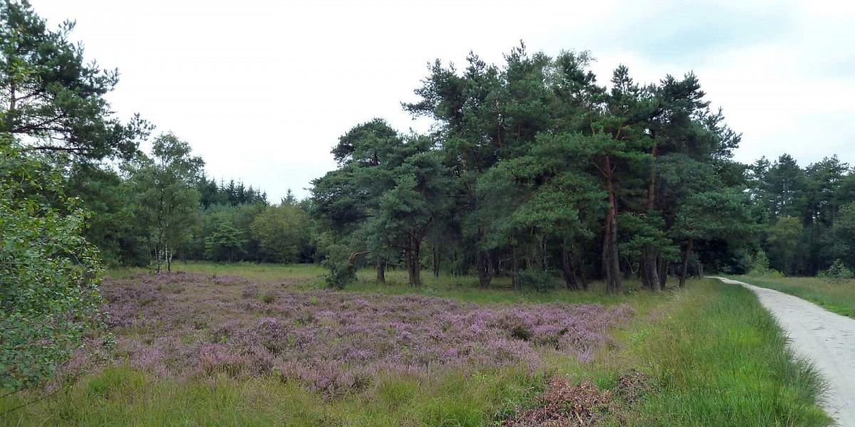 De natuurbegraafplaats